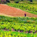 degustazione-vini-formaggi-percorso-enogastronomico